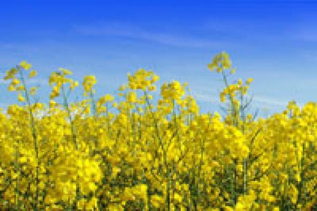 Problemy biopaliw