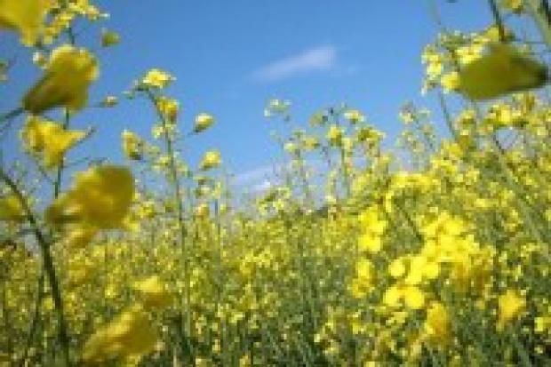 To nie biopaliwa winne są zwyżce cen żywności