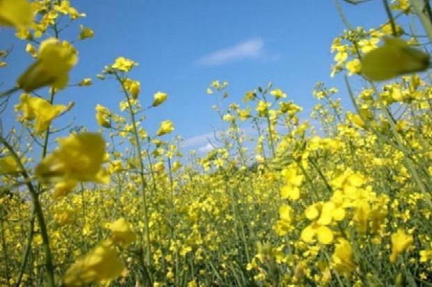 Dalkia rozwija produkcję energii z rolniczej biomasy