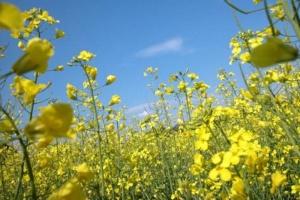 Energia z biomasy - skomplikowany proces inwestycyjny