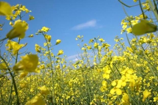 Biopaliwa nakręcą koniunkturę na rynku rolnym