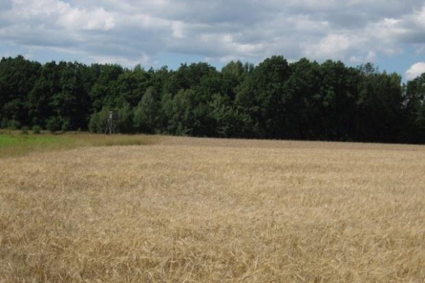 Ziemia rolna w cenie