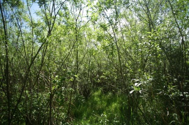 Biomasa może zaspokoić potrzeby energetyczne na świecie