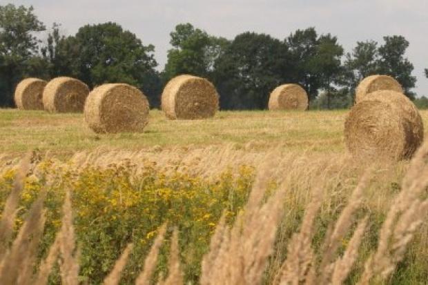 GdF Suez wybuduje w Polsce największą na świecie elektrownię na biomasę