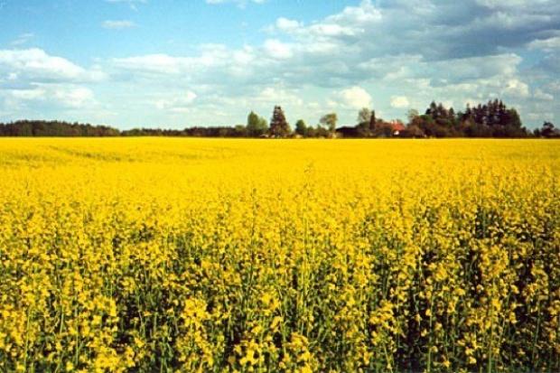 Komisja Europejska przyjęła wytyczne dla wdrażania przepisów dotyczących biopaliw