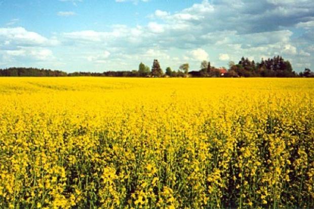 Producenci biokomponentów nadganiają straty po ostrej zimie