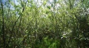 Biomasa - biznes całego świata