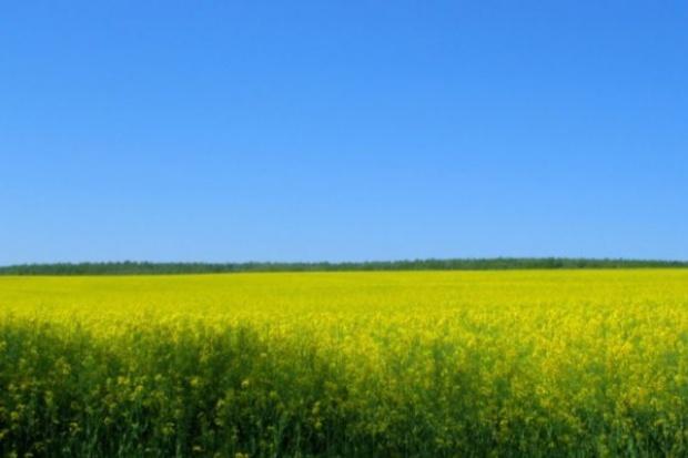 Rząd wystraszył się powtórki biopaliwowej paniki z Niemiec?