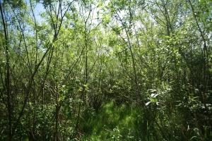Inwestycje biomasowe w elektrociepłowniach
