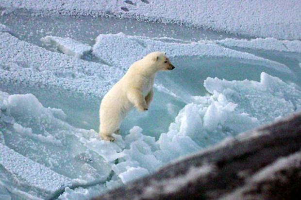 Mittal planuje gigantyczną kopalnę rudy żelaza w Arktyce