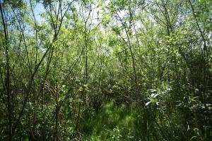 Największa plantacja biomasy w Europie ma być na Pomorzu