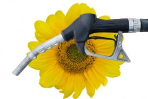 Firmy zapowiadają walkę o biopaliwa roślinne