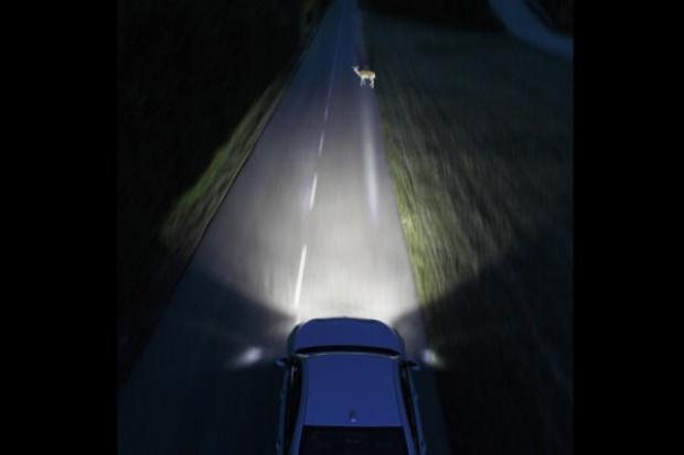 Nowy system BMW ostrzega przed zwierzakami  na drodze