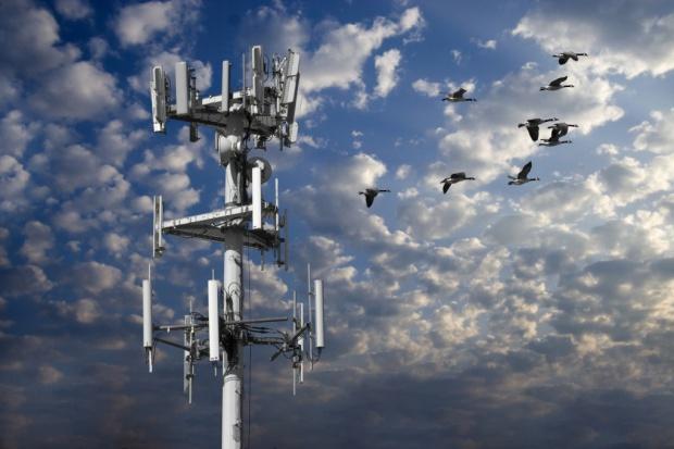 UKE potwierdza plany rozpoczęcia aukcji na 800 MHz w 2013
