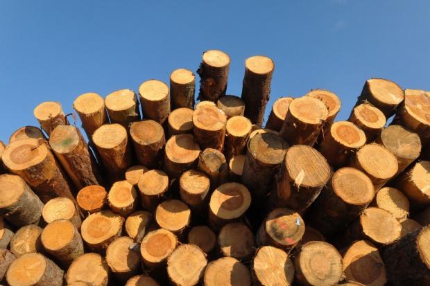 Papiernicy nie chcą pozwolić na palenie drewnem w elektrowniach