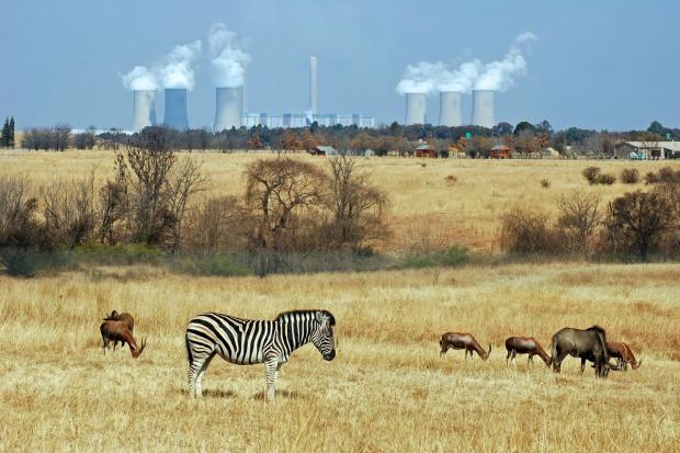 Afrykańskie przyczółki polskiego biznesu