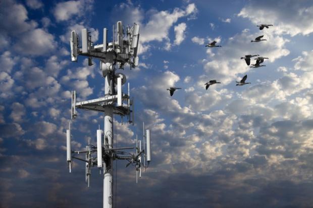 Ericsson i IBM badają nowe anteny łączności bezprzewodowej