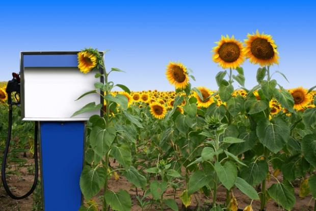 Kraje UE za 7-procentowym limitem dla biopaliw z upraw rolnych