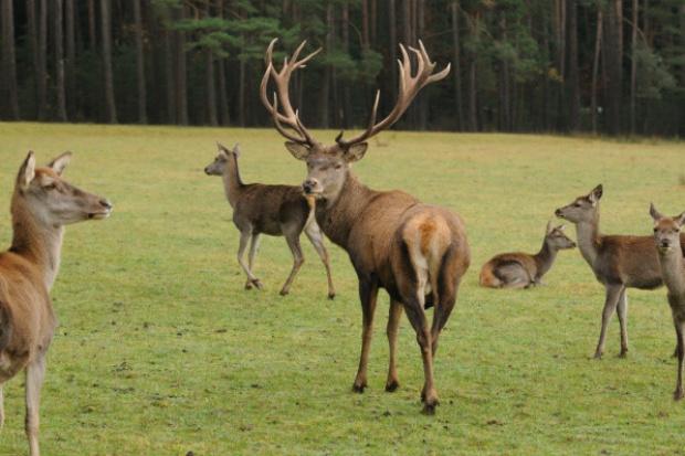 Kopacz: rząd nie planuje prywatyzacji Lasów Państwowych