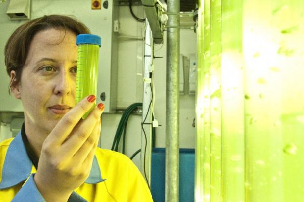 Tata karmi biomasę dwutlenkiem węgla