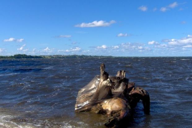 Magazyny gazu szkodzą rybom w Zatoce Puckiej?