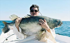 Największą rybą, jaką złowił prezes firmy Electrabel Polska, <strong>Grzegorz Górski</strong> był okoń nilowy. Ważył... bagatela 75 kg. Został złowiony w jeziorze Nassera w Egipcie.