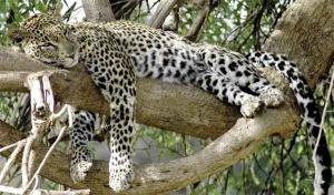 Uczestnicy safari cenią sobie kontakt z naturą w stanie nienaruszonym przez tak bliską cywilizację