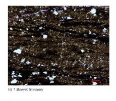 Fot. 1. Mułowiec laminowany