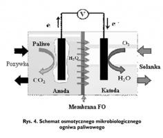 Rys. 4. Schemat osmotycznego mikrobiologicznego ogniwa paliwowego