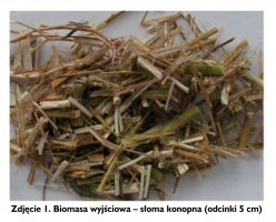 Zdjęcie 1. Biomasa wyjściowa – słoma konopna (odcinki 5 cm)