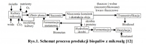 Rys.1. Schemat procesu produkcji biopaliw z mikroalg [12]