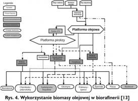 Rys. 4. Wykorzystanie biomasy olejowej w biorafinerii [13]