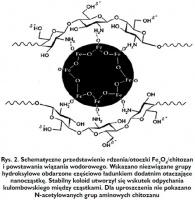 Rys. 2. Schematyczne przedstawienie rdzenia/otoczki Fe3O4/chitozan i powstawania wiązania wodorowego. Wskazano niezwiązane grupy hydroksylowe obdarzone częściowo ładunkiem dodatnim otaczające nanocząstkę. Stabilny koloid utworzył się wskutek odpychania kulombowskiego między cząstkami. Dla uproszczenia nie pokazano N-acetylowanych grup aminowych chitozanu