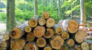 Lasy Państwowe nie nadążają za popytem na drewno