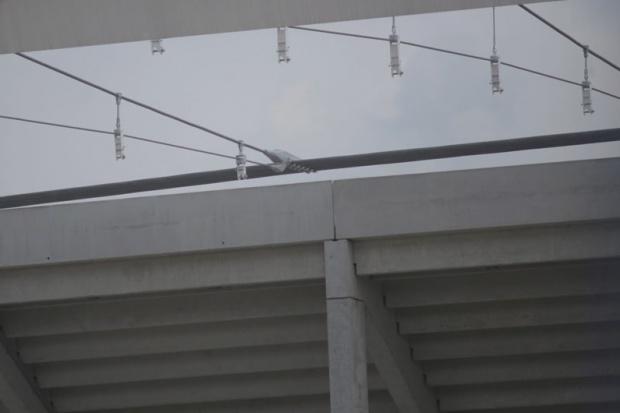 Wkrótce rozstrzygnięcie ważnego przetargu na Stadionie Śląskim