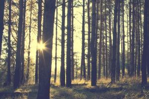 Gdzie moga powstać leśne gospodarstwa węglowe?