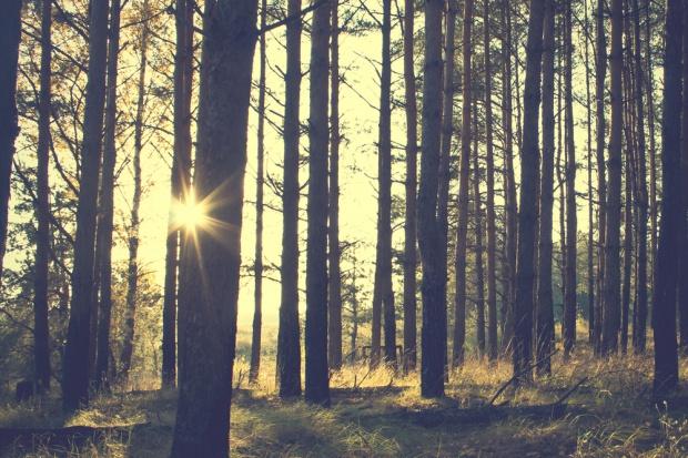 Państwo z prawem pierwokupu prywatnych lasów. Prezydent podpisał ustawę
