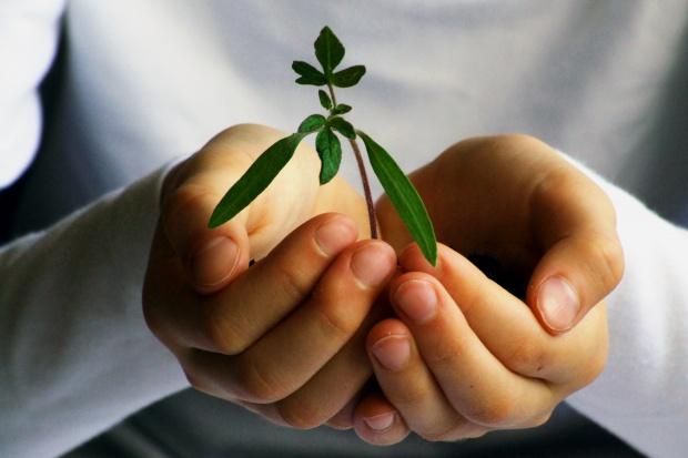 BASF wydaje coraz więcej na badania dot. ochrony roślin