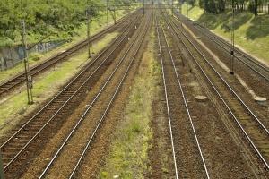 Prasa: kolejarze nie oszczędzają drzew w pobliżu torów
