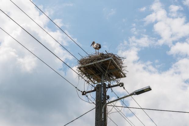 Energa zamontowała 450 platform pod gniazda bocianów