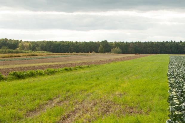 Załamanie na rynku sprzedaży ziemi w Warmińsko-mazurskiem