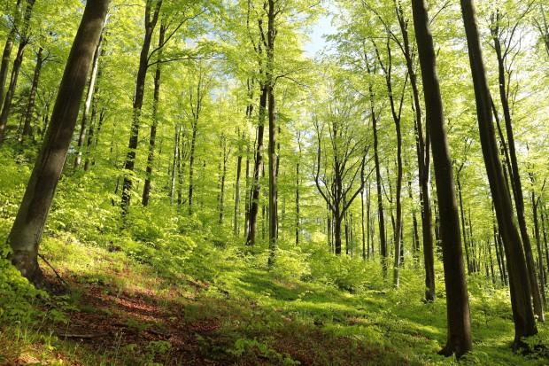 Las, węgiel i czyste technologie w polskim pawilonie na Expo 2017