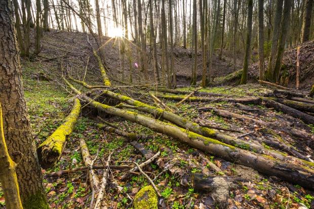 Minister Szyszko: leśne gospodarstwa węglowe polską propozycją w walce z CO2