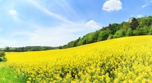 Branża olejowa krytykuje obniżenie Narodowego Celu Wskaźnikowego