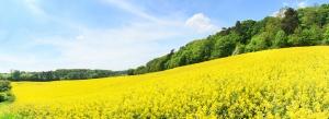 Decyzja europarlamentu ws. biopaliw i wzrostu celu OZE zostanie zmieniona?