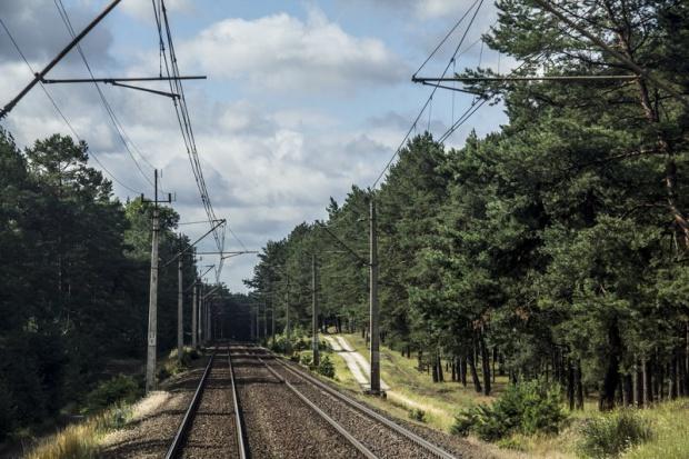 Modernizacja linii kolejowych ma być bezpieczna dla przyrody