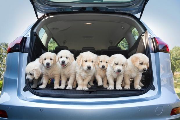 Psie dodatki w autach Opla