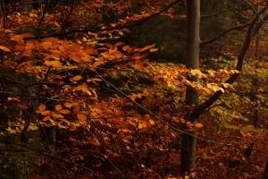 Eksperci: las nie wchłonie całej emisji CO2