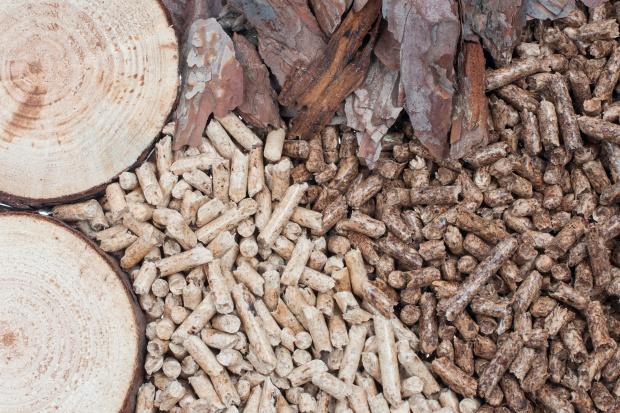 Biomasa zadecyduje o przyszłości polskiej energetyki?