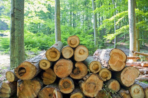 272 miliony zaległości polskiego sektora drzewnego